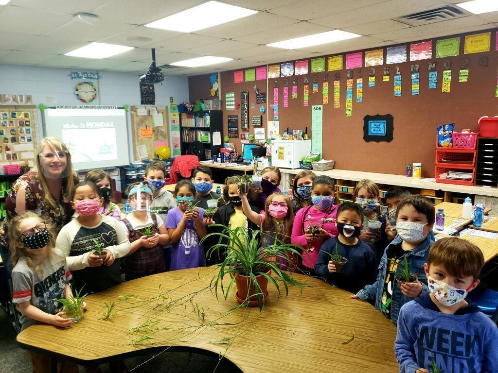 "Mrs. Ward's first grade class has a classroom spider plant named ""Spidey."""