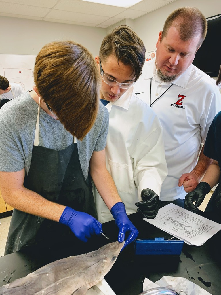 Coach Short's Zoology class, at CHS,  is dissecting a Dogfish Shark.